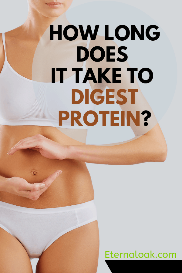 How Long Does It Take To Digest Protein_